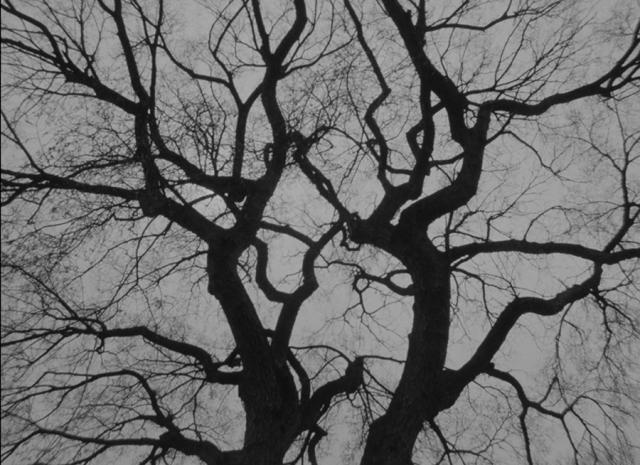 The Tree, 2018 (10 min)